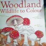 9781409547334 Woodland Wildlife to Colour